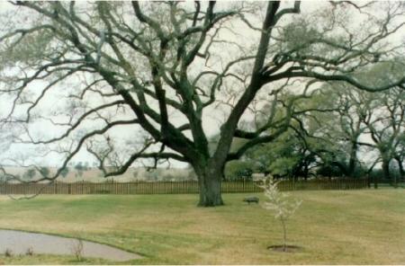 Landscape Houston - Bayside Landscape Services